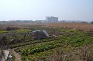 Field of Veggies