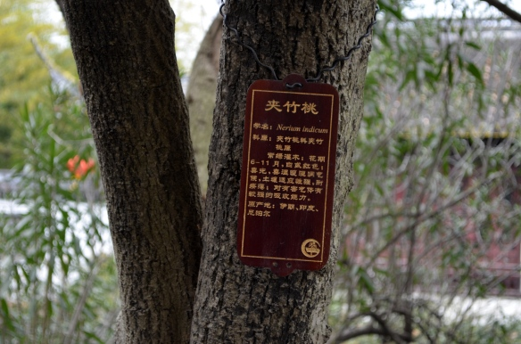 If we look closely, there are trees that have plaques of information about the tree either hanging on the tree or on the ground.
