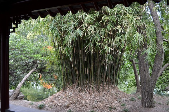Notice that this bamboo section is on an elevated or mound of sorts. We see this quite often in this country.