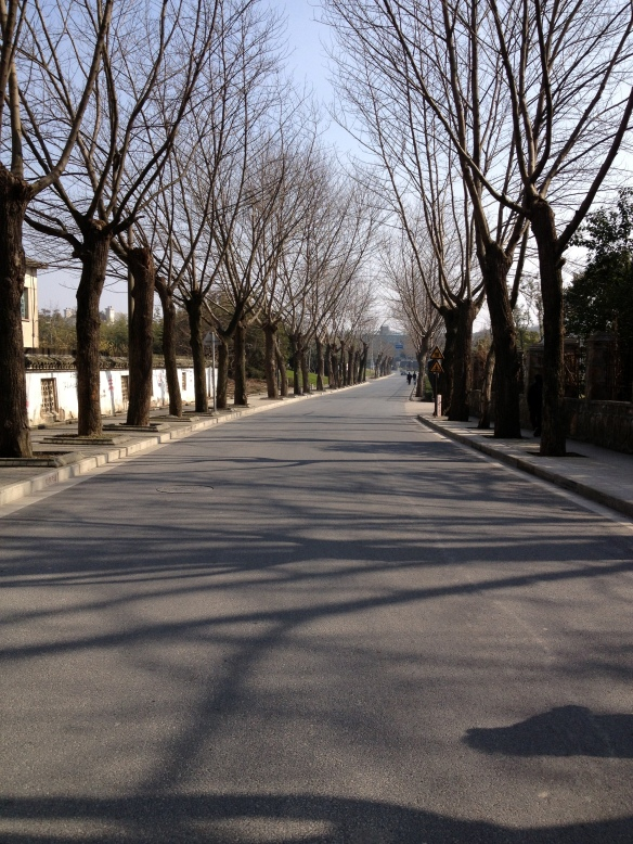 In Shanghai, we were walking down this empty road and noticed the uniformity of the trees.