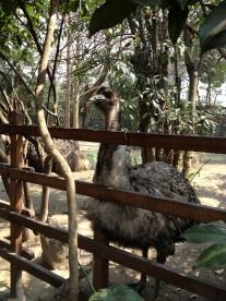Baby Emu - Er Miao