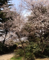 Spring is in the air and the tree blooms in full swing!