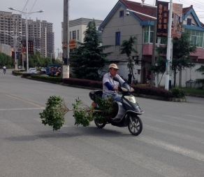 I can move plants, shrubs, and small trees on my scooter...