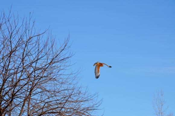 1 Eagle